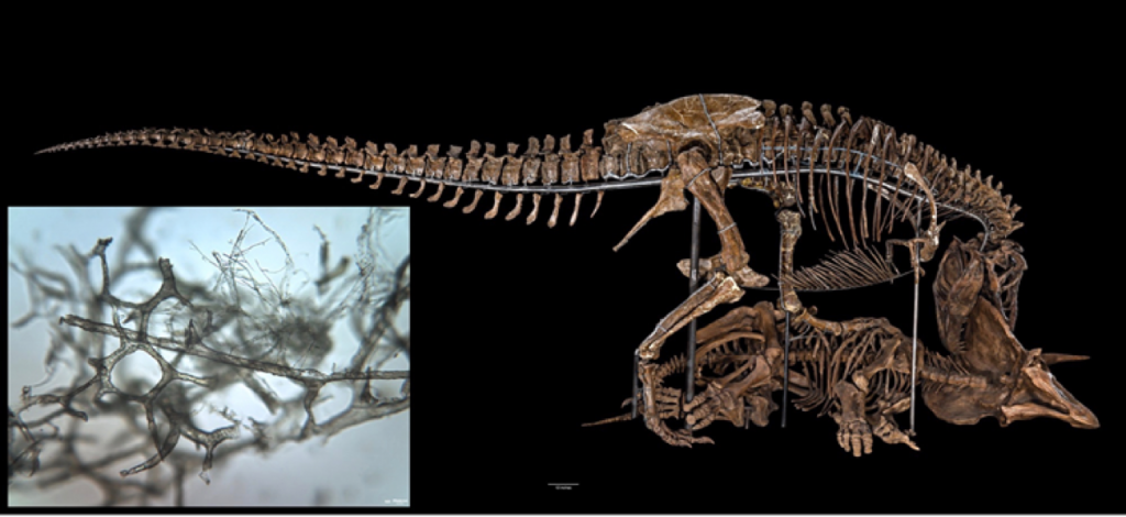 How Dinosaur Blood Vessels Preserve through the Ages Revealed