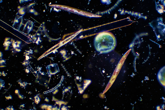 Focusing in on Aquatic Microbes: Berkeley Lab Scientists Receive Grant for New Microscopy Approach